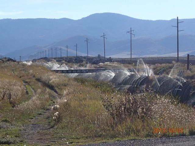 Flynn Irrigation